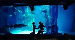 London Aquarium, Eye & Cruise